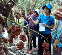 ASEAN Study Tour Gets Farmers, Gov'ts Talking to Each Other