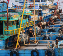 Illegal Fishing Costs Indonesia 3 Billion Dollars A Year