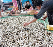 CAMBODIA: Taking the Fishiness Out of A Favourite Food