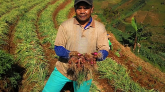 INDONESIA: Controls on Agricultural Imports Protect Whom?