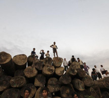 BURMA: Illegal Timber Trade Still Bedevils in 'Balding' Burma